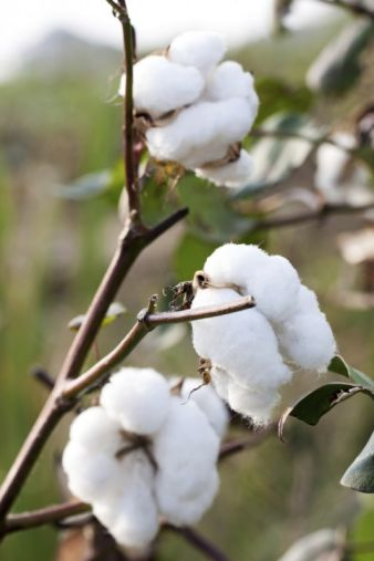 Easier said than done: it is a long path from the raw cotton to the dyeing and finishing processes and the making-up. Creating transparency in the...