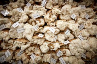 Baumwolle---Baumwollproben.jpg