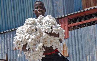 Baumwolle---Arbeiter-in-einer.jpg