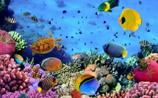 Korallenriff.jpeg