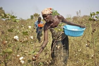 Cotonea---Uganda.jpg