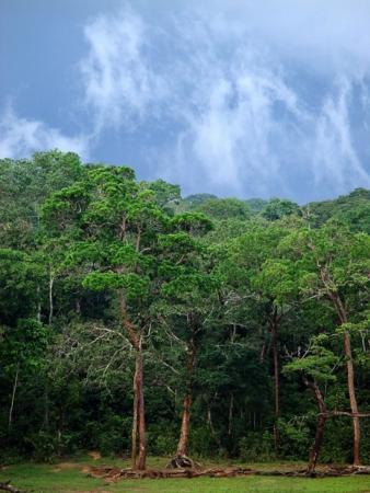 Regenwald-in-Dzanga-Sangha.jpg