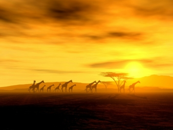 Africa is rising Photo: fotolia